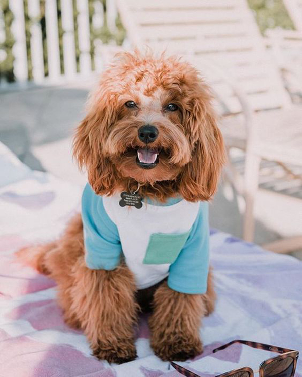 25 Cute And Adorable Dog Clothes For Pet Lovers