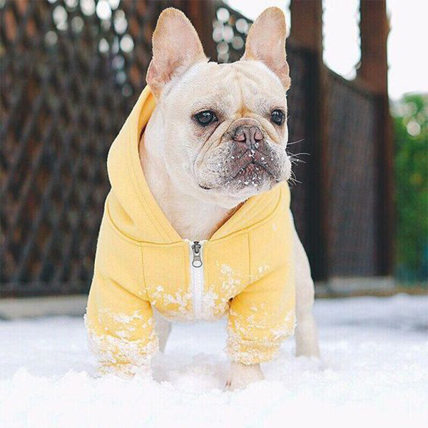 32 Inspiring Dog Outfit Ideas That Makes Them Look Prettiest